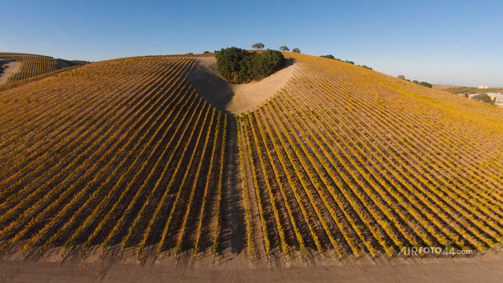 Heart of Wine Country